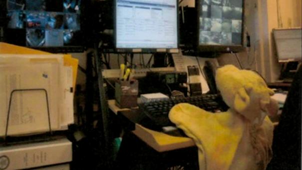 cykl mistrz prezentacji: pluszowa żyrafa biuro ochrony