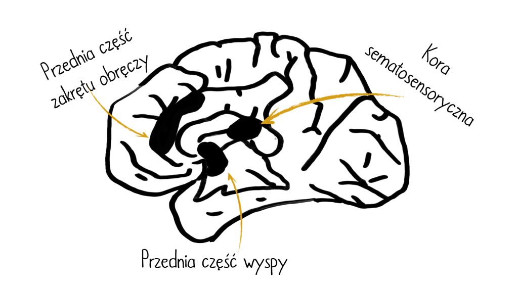 4 warstwy prezentacji - mózg